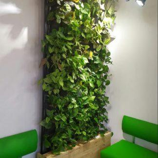 Вертикальное озеленение фитостена