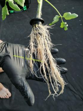 клонирование растений